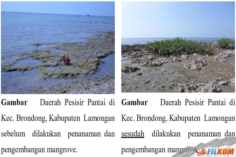 01_hasil_ujicoba_penanaman_mangrove
